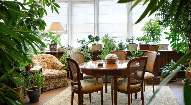 Как создать зимний сад в вашей квартире?