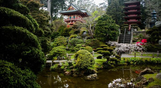 5 особенностей японских садов и почему создание такого проекта стоит доверить компании «Магия Сада» — лучшей в сфере ландшафтного дизайна