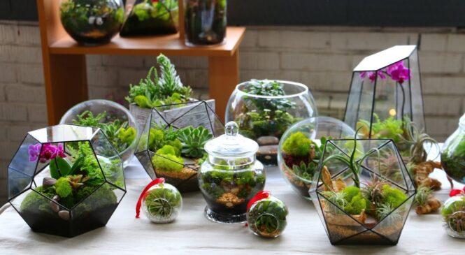 Красивые натуральные растения для искусственных скал
